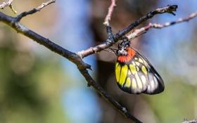Обои цвета, макро, веточка, бабочка, ветка, крылышки