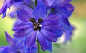 Обои цветок, растение, паутина, лепестки