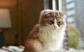 Обои кошка, кот, морда, комната, окно, сидя