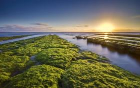 Обои море, водоросли, природа, побережье, утро