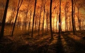 Обои лес, лучи, свет, деревья, природа, фото, вечер
