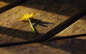 Картинка цветок, макро, свет, желтый, доски, тени, деревяшки