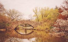 Обои деревья, мост, озеро, отражение, Нью-Йорк, зеркало, вишни