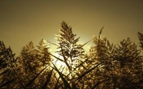 Картинка осень, свет, фон