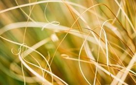Картинка Природа, трава, макро