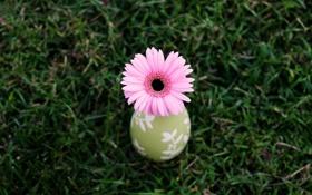 Обои цветок, трава, природа, фон, обои, растения, ваза