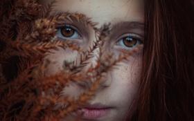 Обои осень, веснушки, кареглазая, Brookie
