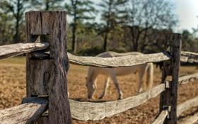 Обои забор, конь, макро