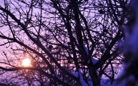 Картинка Закат, Дерево, Цвета