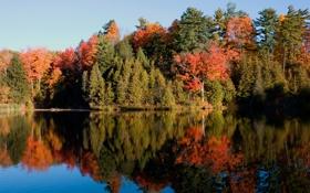 Обои лес, вода, зеркало, scanlon creek
