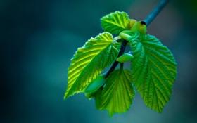 Картинка макро, листва, ветка, весна