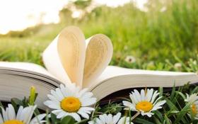 Картинка лето, трава, сердце, ромашки, книга, страницы