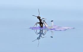 Обои муравей, цветок, отражение, вода, макро