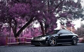 Обои деревья, купе, розовые, автомобиль, Mercedes Benz, мерседес, CLK
