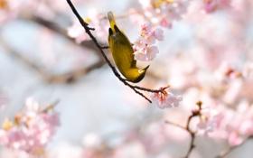 Обои весна, сакура, птичка, жёлтая, сетки