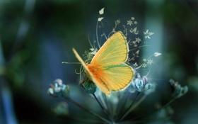 Обои цветок, орнамент, бабочка, крылья, лапки, веточка
