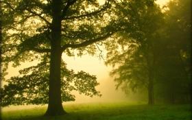Обои лес, туман, утро