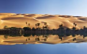 Картинка песок, озеро, пальмы, пустыня, дюны, оазис, Ливия