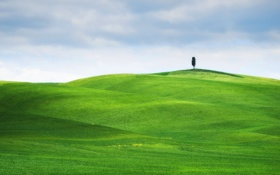 Картинка поле, небо, трава, пейзаж, зеленый, дерево, луг