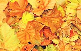 Обои осень, листья, желтый