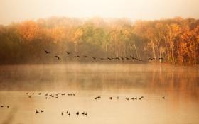Картинка осень, деревья, природа, озеро, пруд, утки, стая
