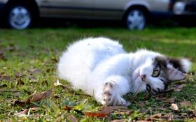 Обои кошка, трава, котенок, улица, лежит