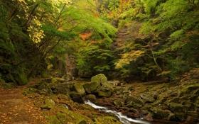 Обои осень, лес, деревья, ручей, камни, заросли