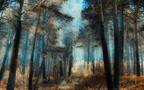 Обои лес, деревья, яркость