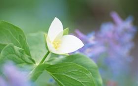 Обои листья, цветок, стебель, белый, растение, зелень