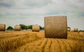 Обои сено, поля, фермы, деревья, облака, боке