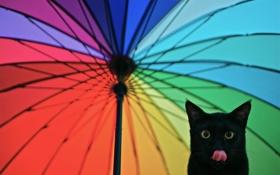 Обои язык, взгляд, зонтик, Кот