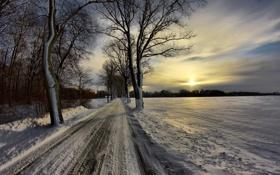 Картинка природа, дорога, пейзаж, деревья, солнце