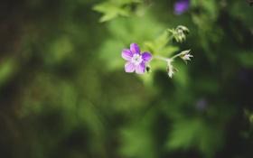 Обои цветок, фиолетовый, лепестки