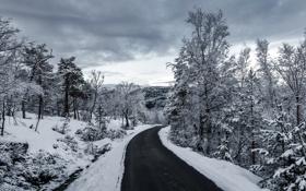 Картинка зима, дорога, снег, деревья, серые облака