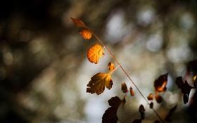Картинка листья, макро, деревья, фон, дерево, обои, размытие