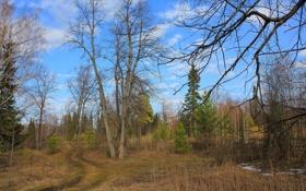 Картинка весна, небо, облака, лес, елка, распутица, деревья