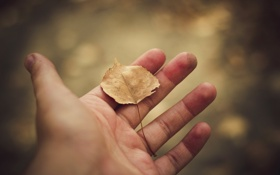Обои рука, лист, ладонь