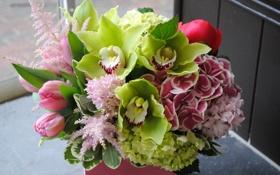 Обои букет, Тюльпаны, Орхидеи, Гортензия, Морозник