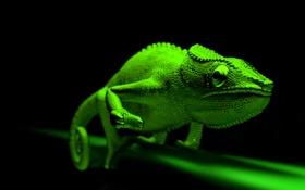 Обои глаза, зеленый, хамелеон, ящерица