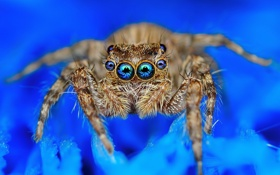 Обои глаза, макро, природа, паук