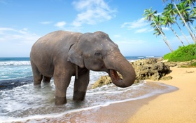Обои elephant, tropical, слон, море, sand, берег, песок