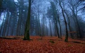 Обои листья, деревья, природа, дерево, листва, листок, вечер