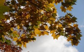 Обои осень, природа, настроение, разное