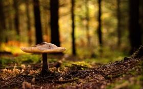 Картинка лес, блики, грибочек