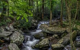 Картинка зелень, лес, деревья, ручей, камни, hdr