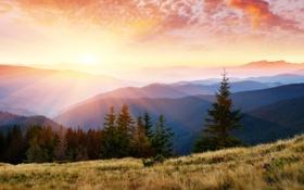 Картинка небо, трава, лучи, свет, деревья, горы, природа