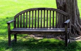 Обои поляна, скамейка, трава, лето, дерево