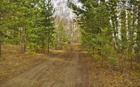 Картинка дорога, осень, лес, деревья, березы, сосны