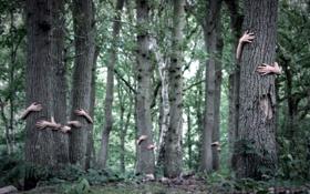 Картинка лес, деревья, руки