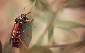 Картинка зелень, листья, насекомое